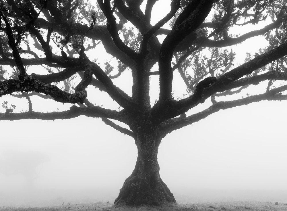 Forêt de Fanal à Madère